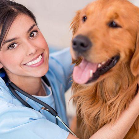 Pet Ultrasound – FAST